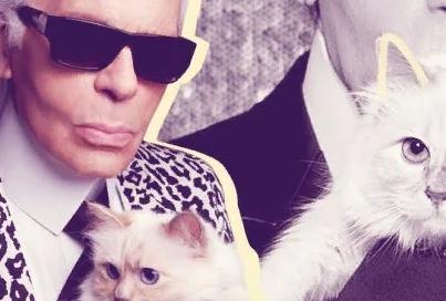САМАЯ БОГАТАЯ КОШКА МИРА: как наследство знаменитого дизайнера Карла Лагерфельда после смерти перешло к его кошке